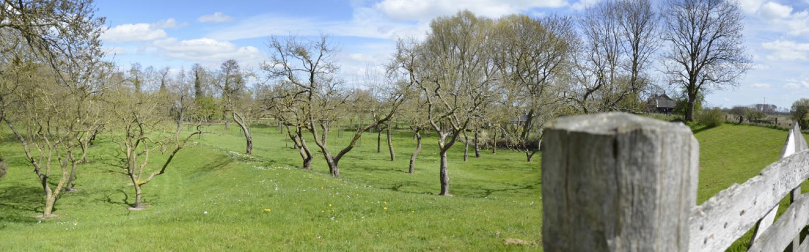55d00e53d142 Hoogstamboomgaard langs de IJssel